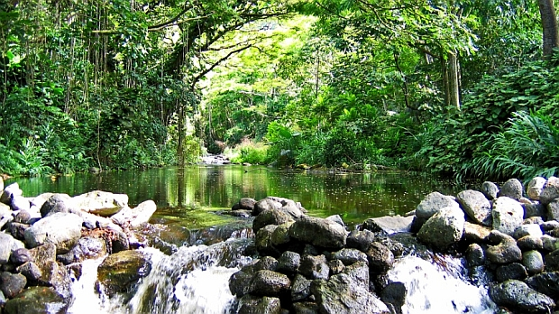 Waipo Valley Stream, a hidden gems to be found on some of the most discriminating Big Island vacations.
