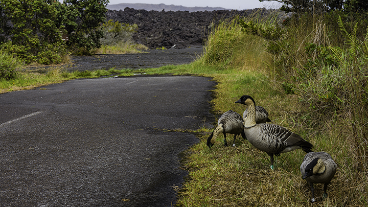 Another hidden hot spot on the Big Island at Hawaii Volcanoes National Park.